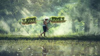 kambodża_WNT.jpg